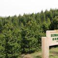Sema Yazar Ormanı